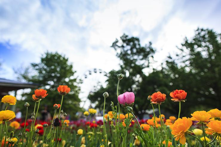 A snapshot from Floriade flower festival.